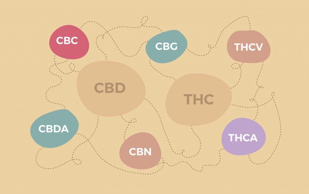 Es una ilustración de los cannabinoides menores. Aparecen en grande CBD y THC y alrededor aparecen los cannabinoides CBD, CBG, CBN, CBDA, THCA, THCV