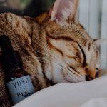 Animales y cbd: gatita dormida con aceite Pura Calma
