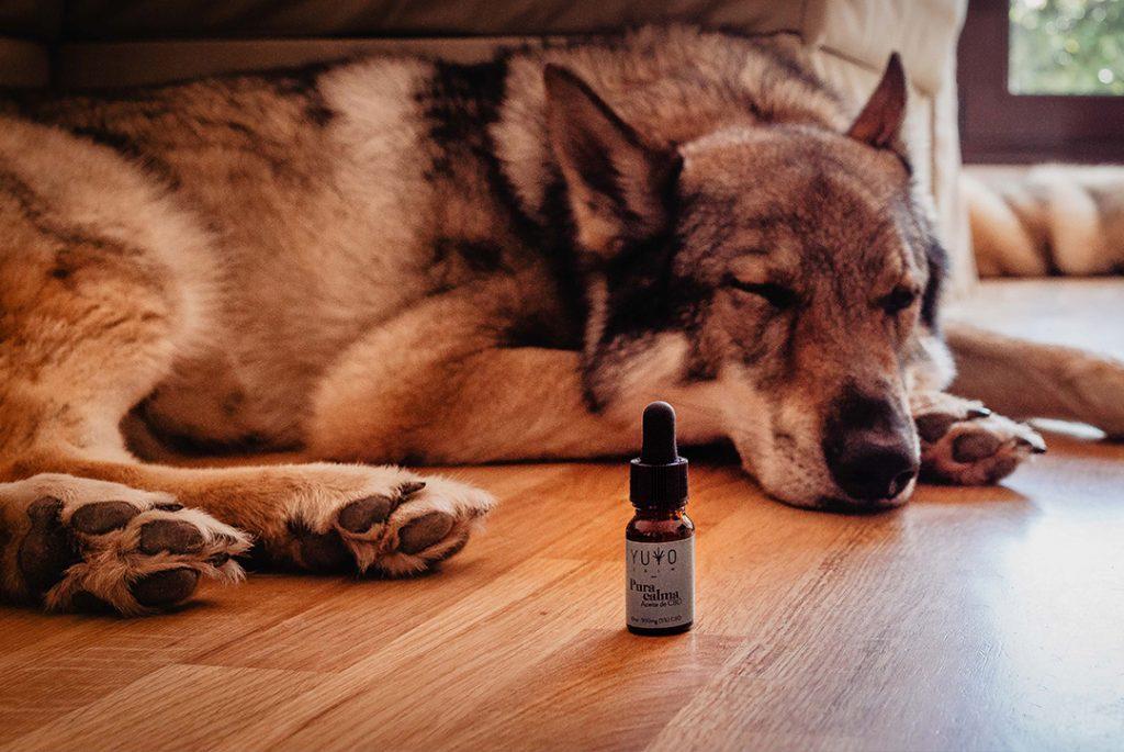 Perro dormido con bote de CBD Pura calma para ilustrar el artículo animales y cbd.
