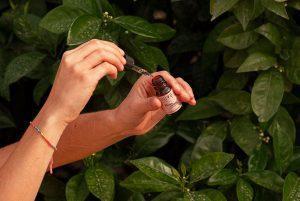imagen de un aceite de cbd para ilustar el post de los mitos entorno al él